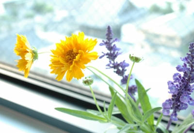 2010.6.1初夏の花